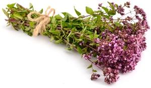 Oregano: Pěstování, účinky, použití