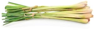 Citrónová tráva: Pěstování, účinky, použití