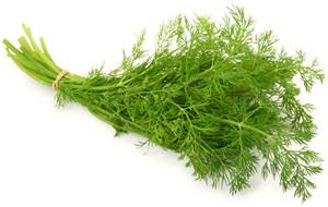 Kopr: Pěstování, účinky, použití