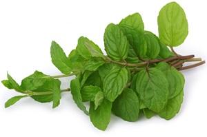 Laskavec - amarant: Pěstování, účinky, použití