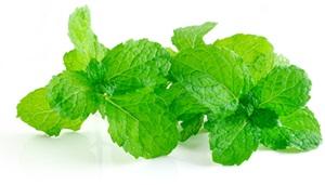 Máta peprná: Pěstování, účinky, použití