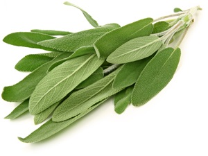 Šalvěj: Pěstování, účinky, použití