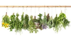 Yzop: Pěstování, účinky, použití