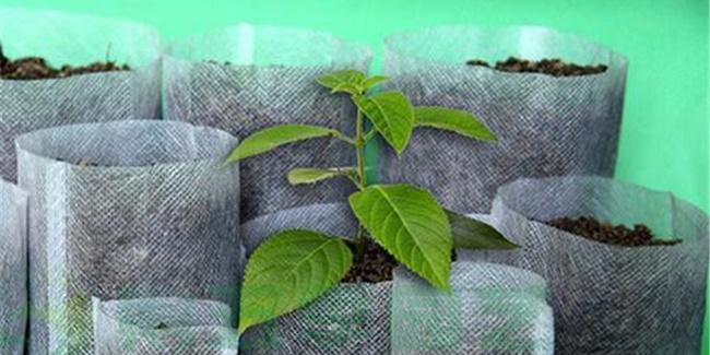 Tipy z AliExpress: 10 zajímavých věcí pro zahradničení